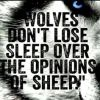 Wolves don't lose sleep