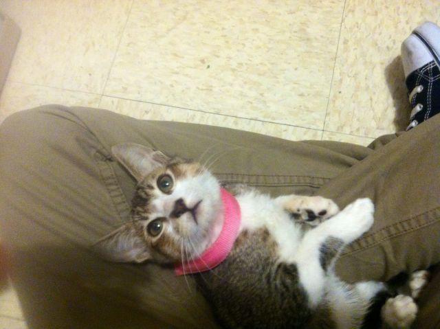 My kitteh :D